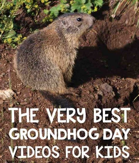 groundhog day type groundhog day february ground hog and kindergarten