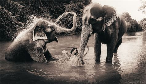 neve cbell on colbert ashes and snow cinza e neve por gregory colbert