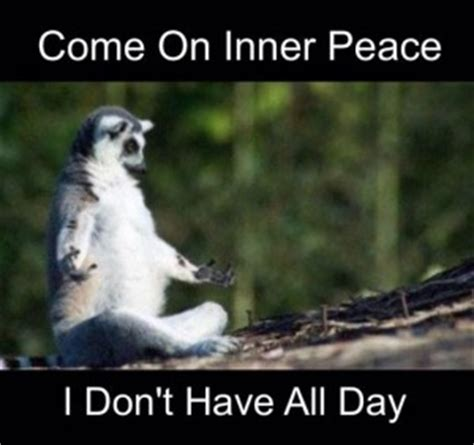 Of Peace Meme - donna reade quickbooks online consulting bookkeeping