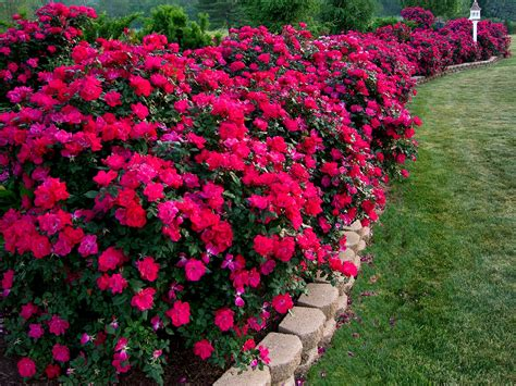 pictures of flower beds flower beds professional landscaping systems