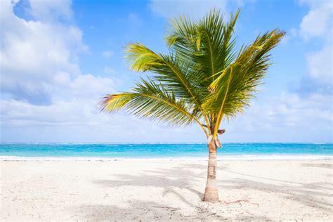 Sanganak Ka Mahatva Essay by Coconut Tree Of Essay