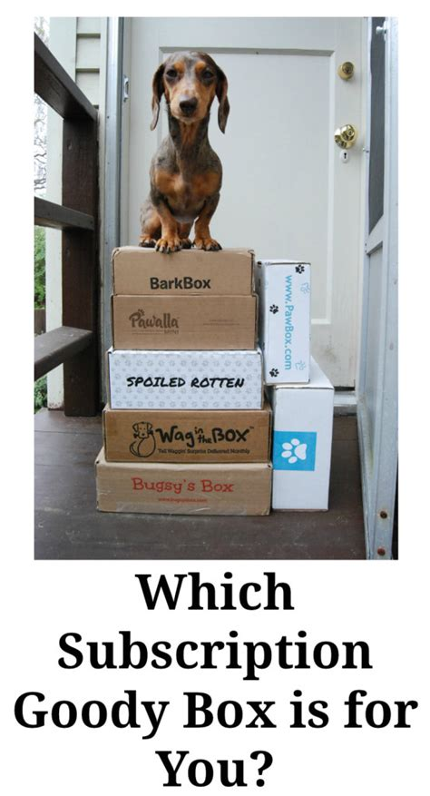monthly subscription boxes for dogs which subscription goody box is for you