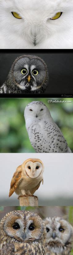wallpaper owl keren pin by brenda peterson on it s a hoot pinterest