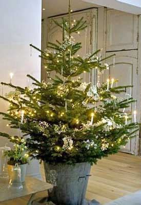 caring for and planting a live christmas tree planet natural