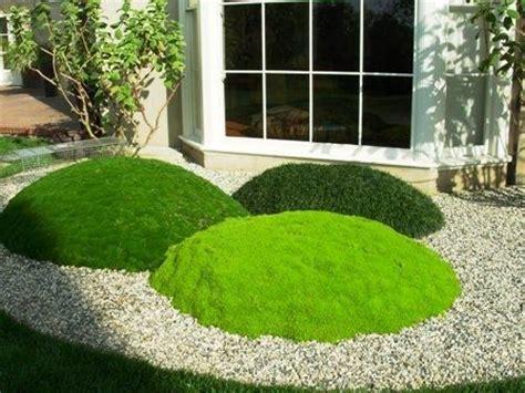grass mounds korean velvet grass cushion plant and mini mondo beautiful planting