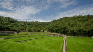 Landscape Pictures Rice Field Nakamura Masakatsu Photo P M Lydon Cc By