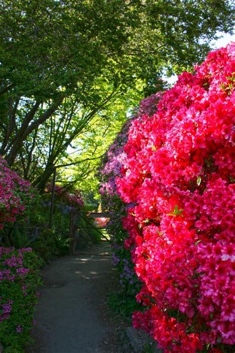 rhododendron hecke kostenlose stock fotos rgbstock kostenlose bilder