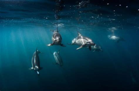 imagenes raras del fondo del mar espectaculares im 225 genes de animales en el fondo del mar
