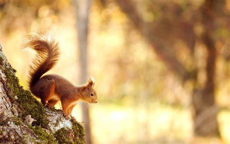 eichhörnchen im herbst 5659 eichh 246 rnchen im herbst hintergrundbilder eichh 246 rnchen im