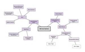 Thought Process Map Template by Mind Map Exles And Templates Lucidchart