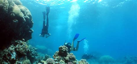 dive packages belize all inclusive dive package belizean dreams resort