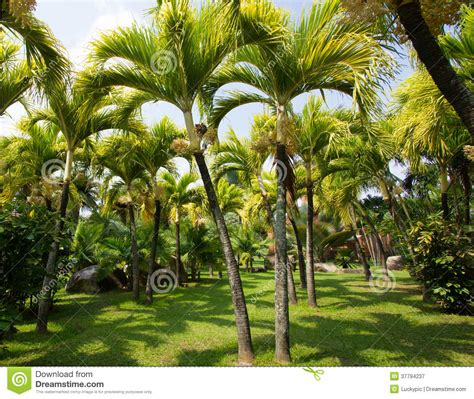 outdoor palm tree l post palm tree in the garden royalty free stock photography