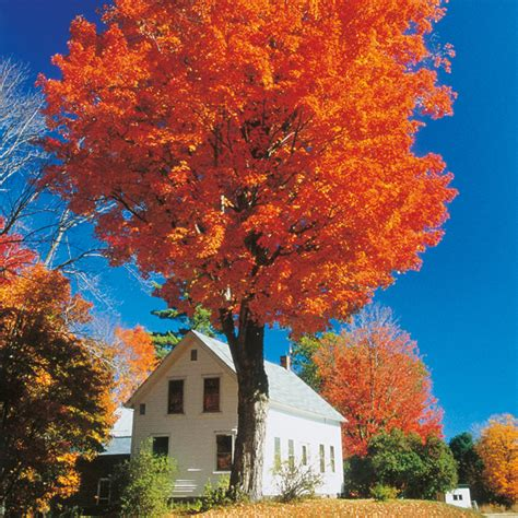 new england s spectacular fall foliage summer 2017 new england s spectacular fall foliage summer 2017