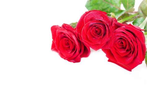 Imagenes Tres Rosas | tres rosas rojas decorativas descargar fotos gratis