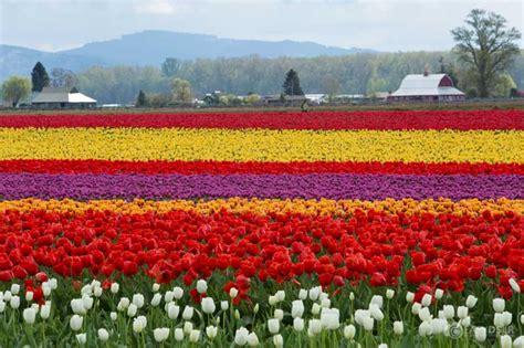 festivals usa 20 beautiful festivals all the world you like to take