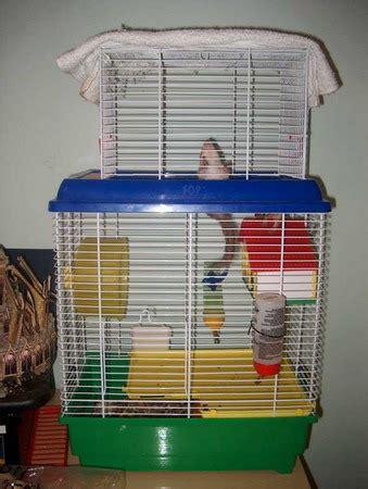 la gabbia forum scoiattoli tamia pagina 6