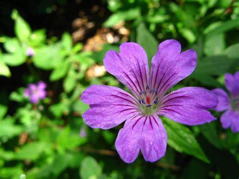 Fleur Violette by Quelques Liens Utiles