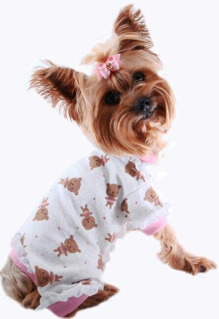 yorkie pajamas 2795 best images about yorkies