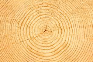 Tree Ring - best tree ring photos 2017 blue maize