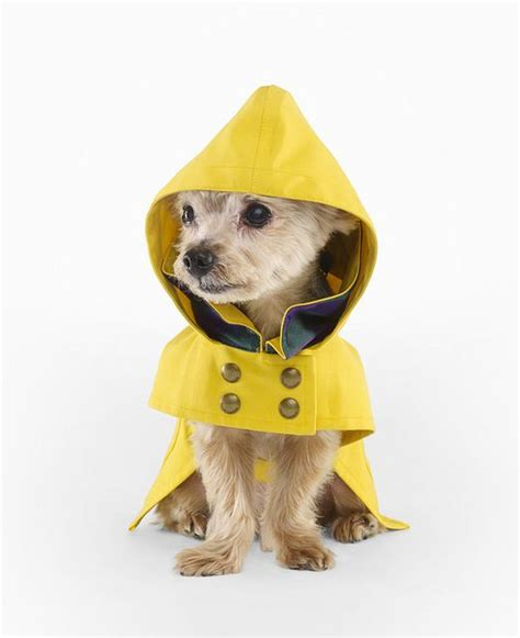 puppy raincoat 25 best ideas about raincoat on coat pattern coats for dogs and