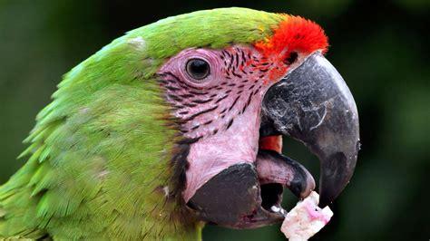 imagenes animadas que hablan por qu 233 hablan los loros y 14 curiosidades de estas aves