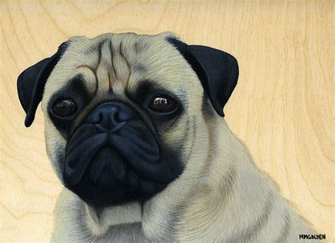 do pugs stay small pug acrylic painting pet portraits by melinda m golden