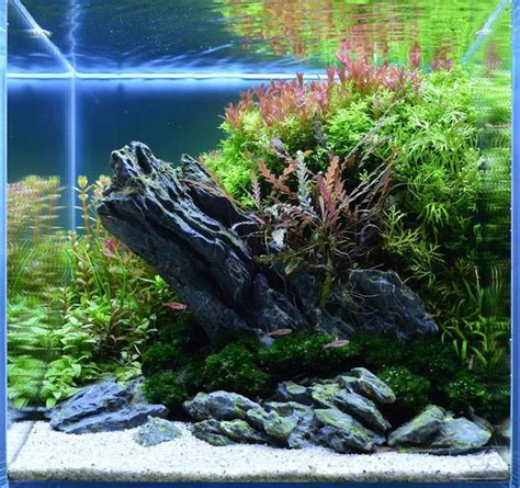 Aquascaping Aquarium by Nano Aquascapes Aquascaping Aquarium