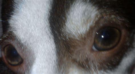 imagenes a blanco y negro de perros decaninos blogspot com 191 los perros ven en blanco y negro