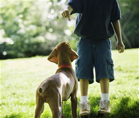 how to trained dogs how to get your children involved with paws uk