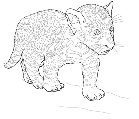baby jaguar coloring page free printable coloring pages