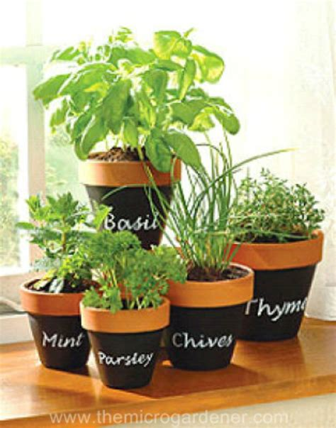 indoor herb pots indoor herb garden ideas creative juice
