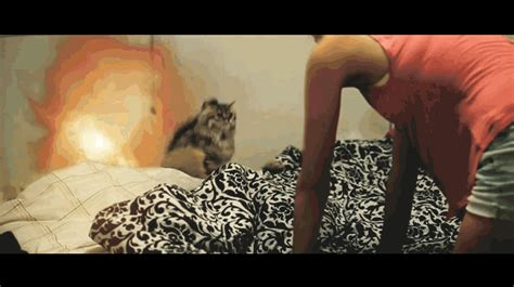 461710 the cat purr dance licence to purr cute cat gifs