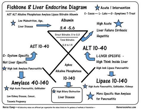 17 Best Images About Nurse Tips Notes On Pinterest Pharmacology Assessment And Nursing Sle Ishikawa Diagram
