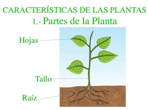 olguchiland las plantas ii las plantas
