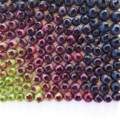 what color are blueberries photographer captures stunning gradients of color using food