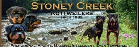 stoney creek rottweilers stoney creek rottweilers home page