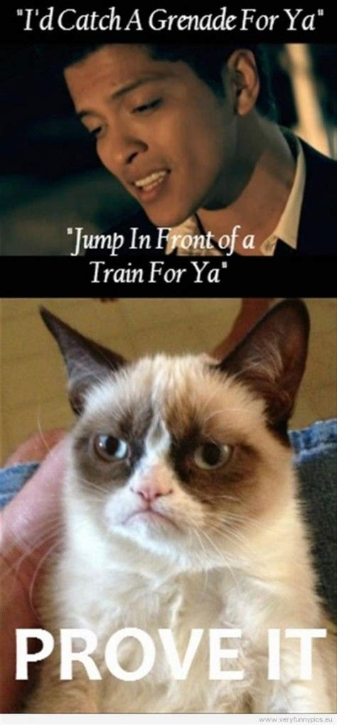 Grumpy Cat Funniest Memes - 144 best images about funny quotes on pinterest grumpy