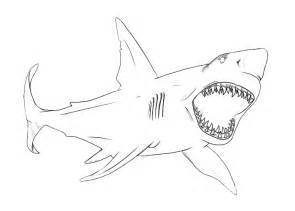 coloring pages sharks great white shark coloring page animals town animals color