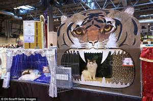 cat show drapes show curtains cat images
