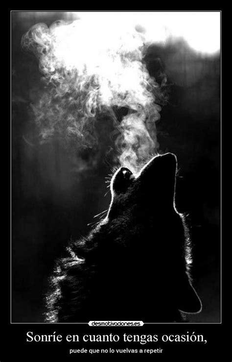 imagenes en blanco y negro de lobos sonr 237 e en cuanto tengas ocasi 243 n desmotivaciones