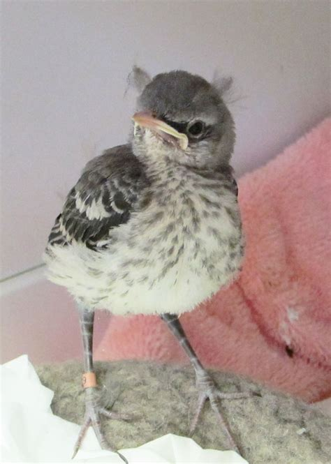 volunteer knitters answer wildcare s call to save baby
