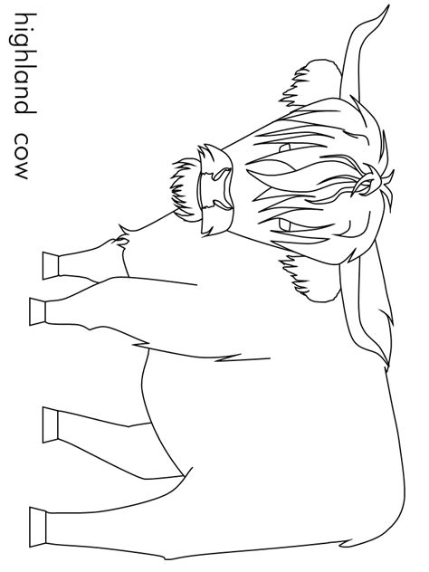 highland cow coloring page highland cattle coloring download highland cattle coloring