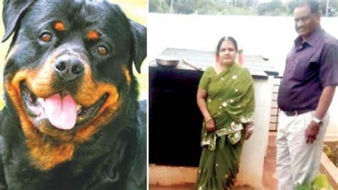 rottweiler attacks child attack child recovering of mysore