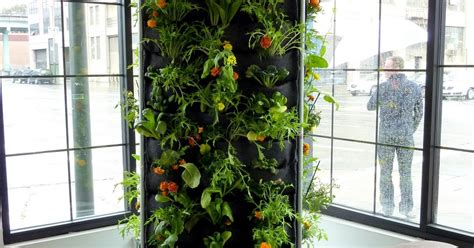 Aquaponic Vertical Garden Plants On Walls Vertical Garden Systems Aquaponic