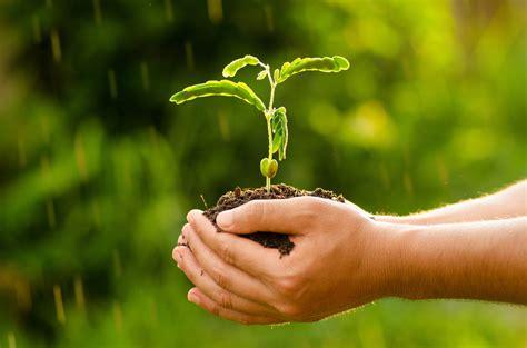 plantagricultureseedseedingtreeforest male hand