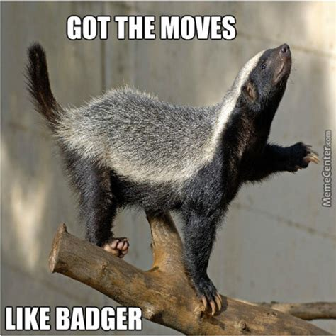 Badger Memes - image 718118 honey badger know your meme