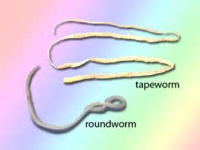 keeping your cat worm free my lovely cats