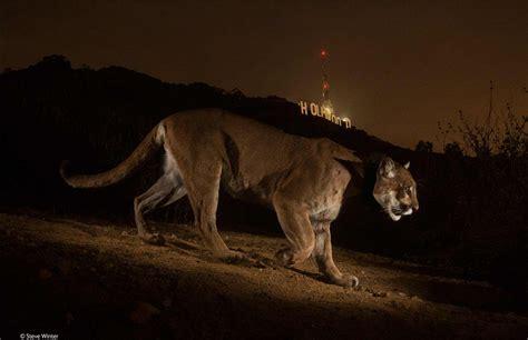 annual wildlife photography awards announced