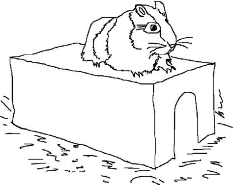 coloring page of a guinea pig guinea pig coloring pages coloring home