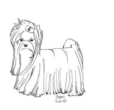 teacup puppies coloring pages teacup yorkie coloring pages coloring pages